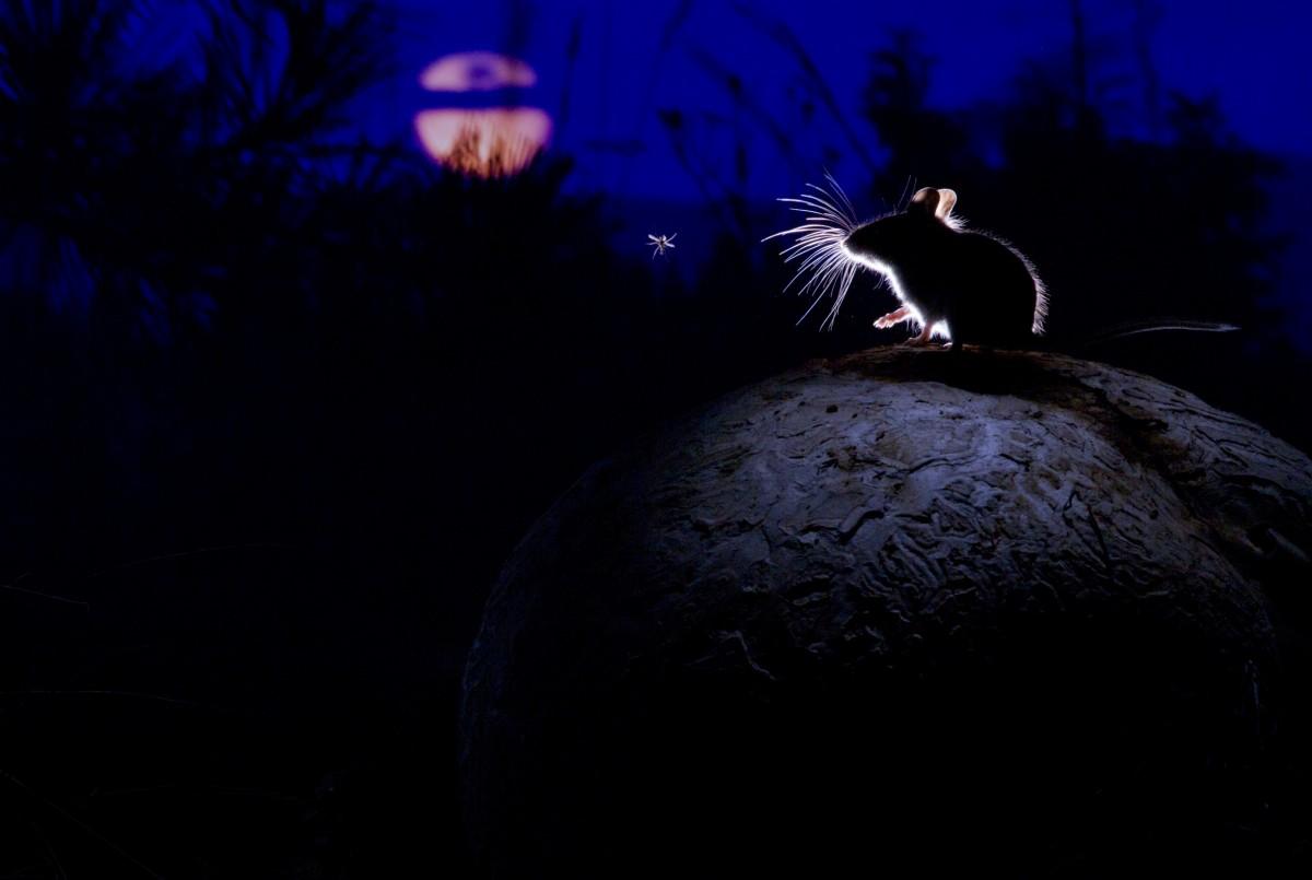 2014 - 16 - Mysz. księżyc i komar