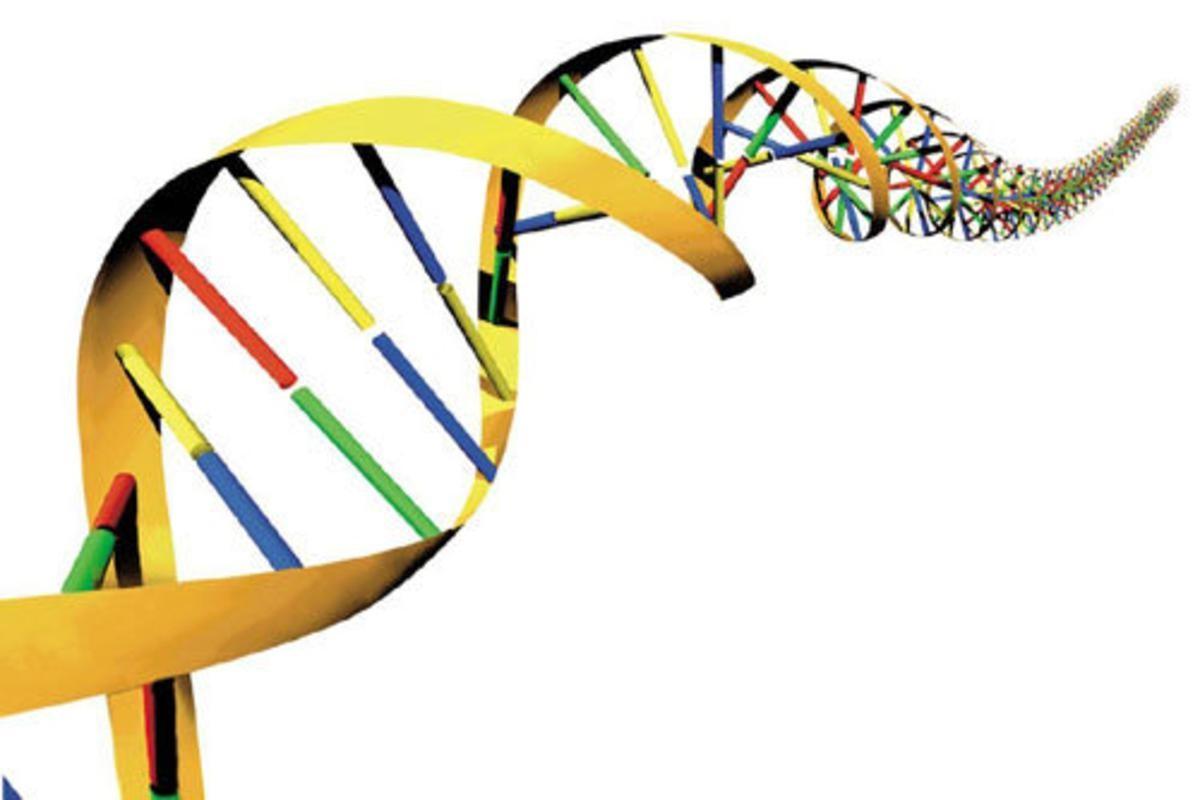 Helisa DNA_1200x800