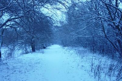 las zima Nakło