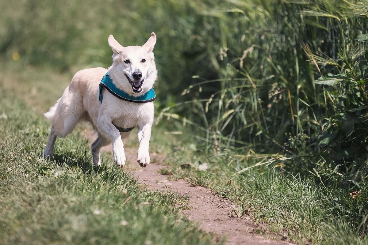 dog-644111_1280