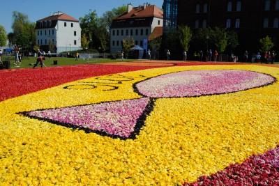 Dywan kwiatowy na Wyspie Młyńskiej - LG (8)