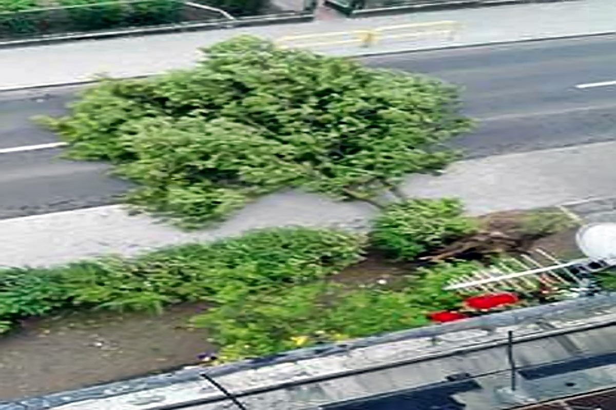 drzewo Gajowa_1200x800_filtered