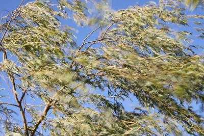wiatr,