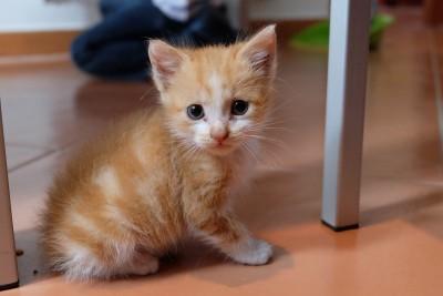 cat-723031_1280