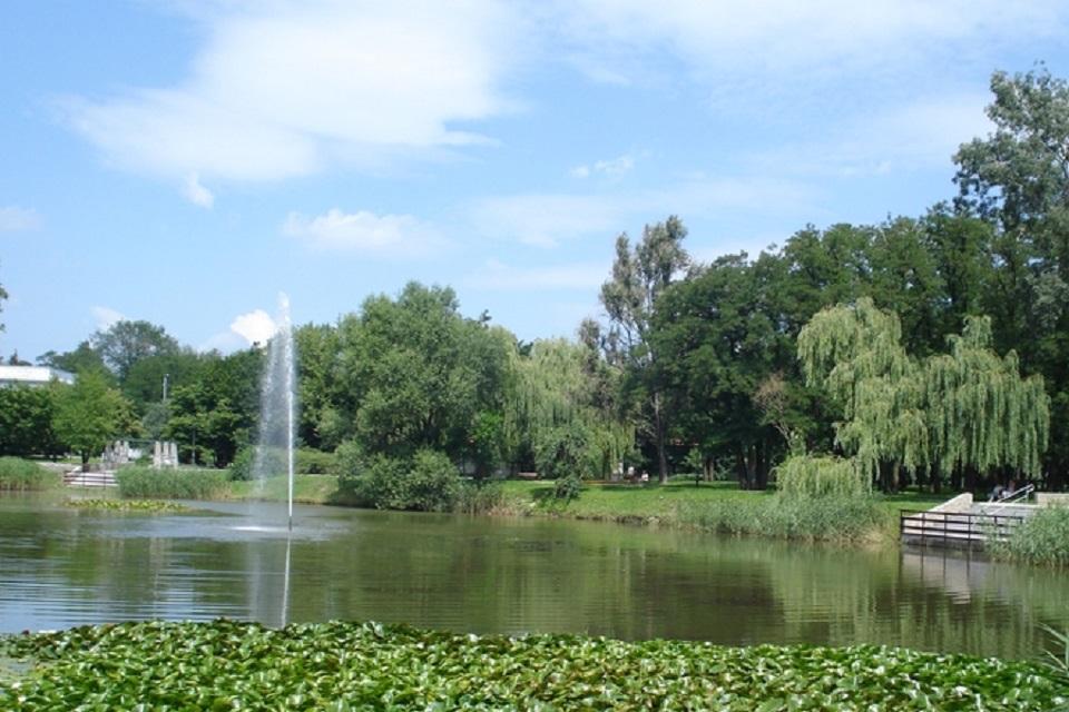 staw, park solankowy