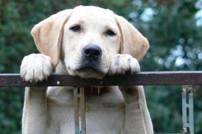 dog-1604357_1280