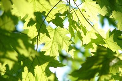 leaves-291024_1280