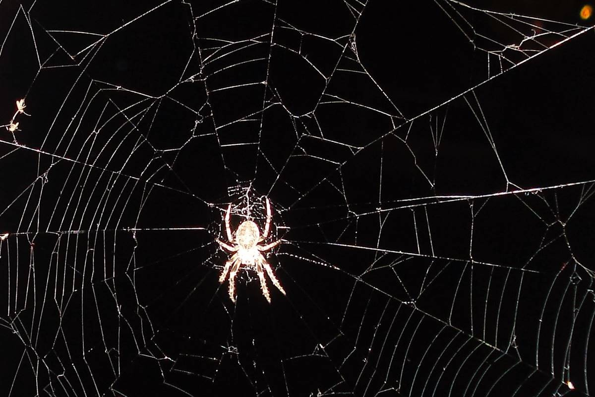 kontanty, blog, pająk