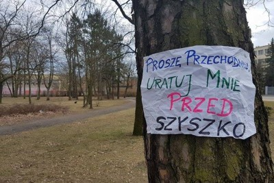 drzewo_protest_DG (3)
