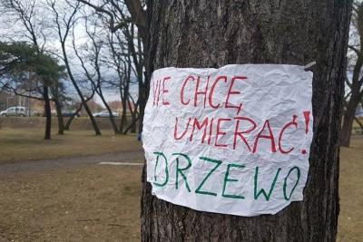 drzewo_protest_lex_szyszko_DG (1)