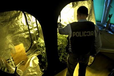 plantacja, narkotyki, policjant, - mat policji
