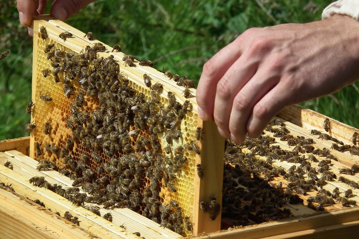 Pszczoły na WSG