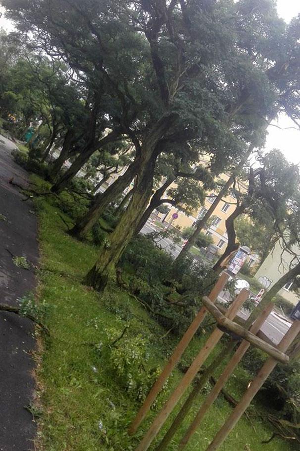 lesne_grzegorz_drab001