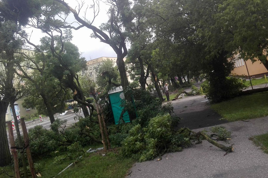 lesne_grzegorz_drab002