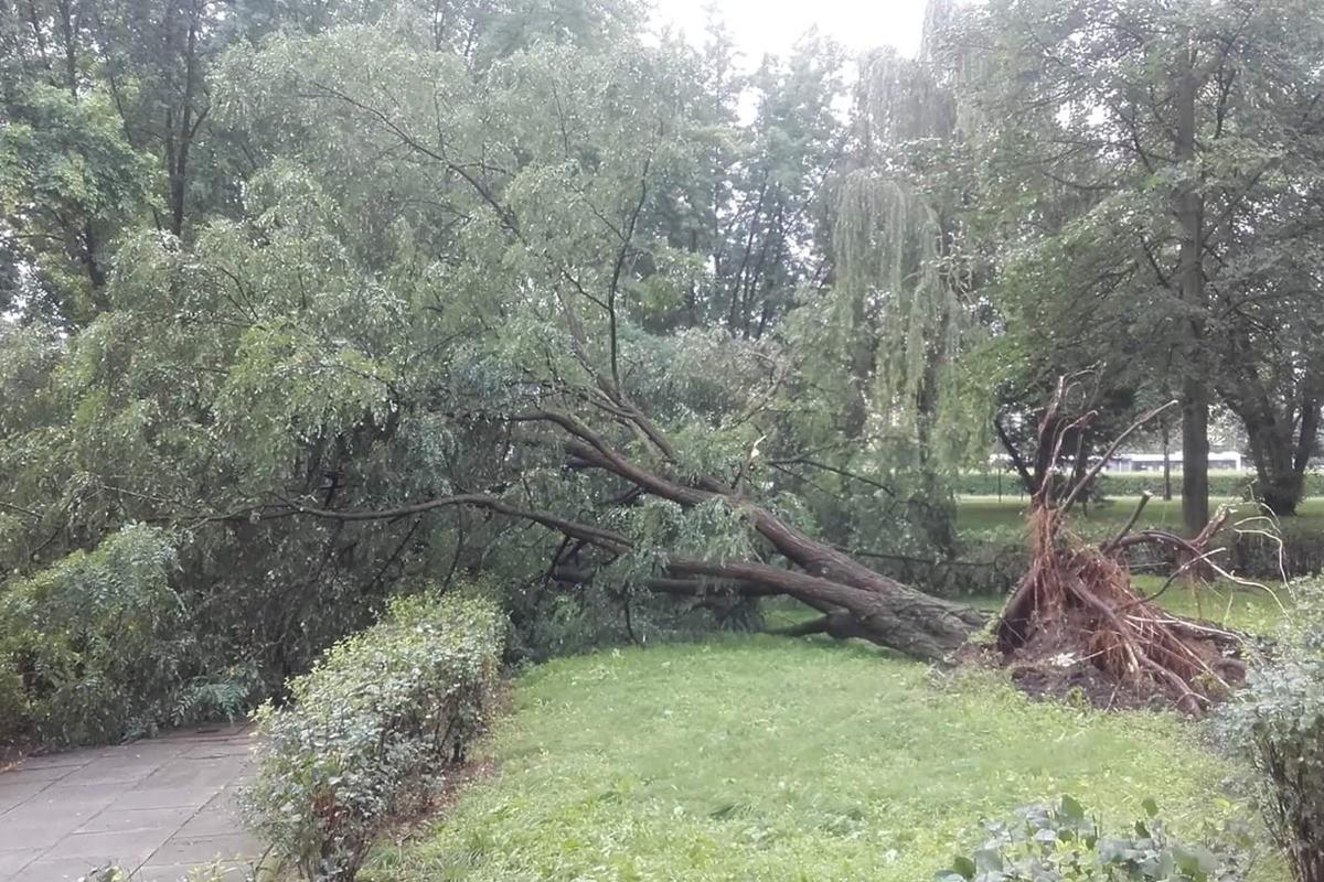 nawałnica, burza, drzewo - agis nasti agula