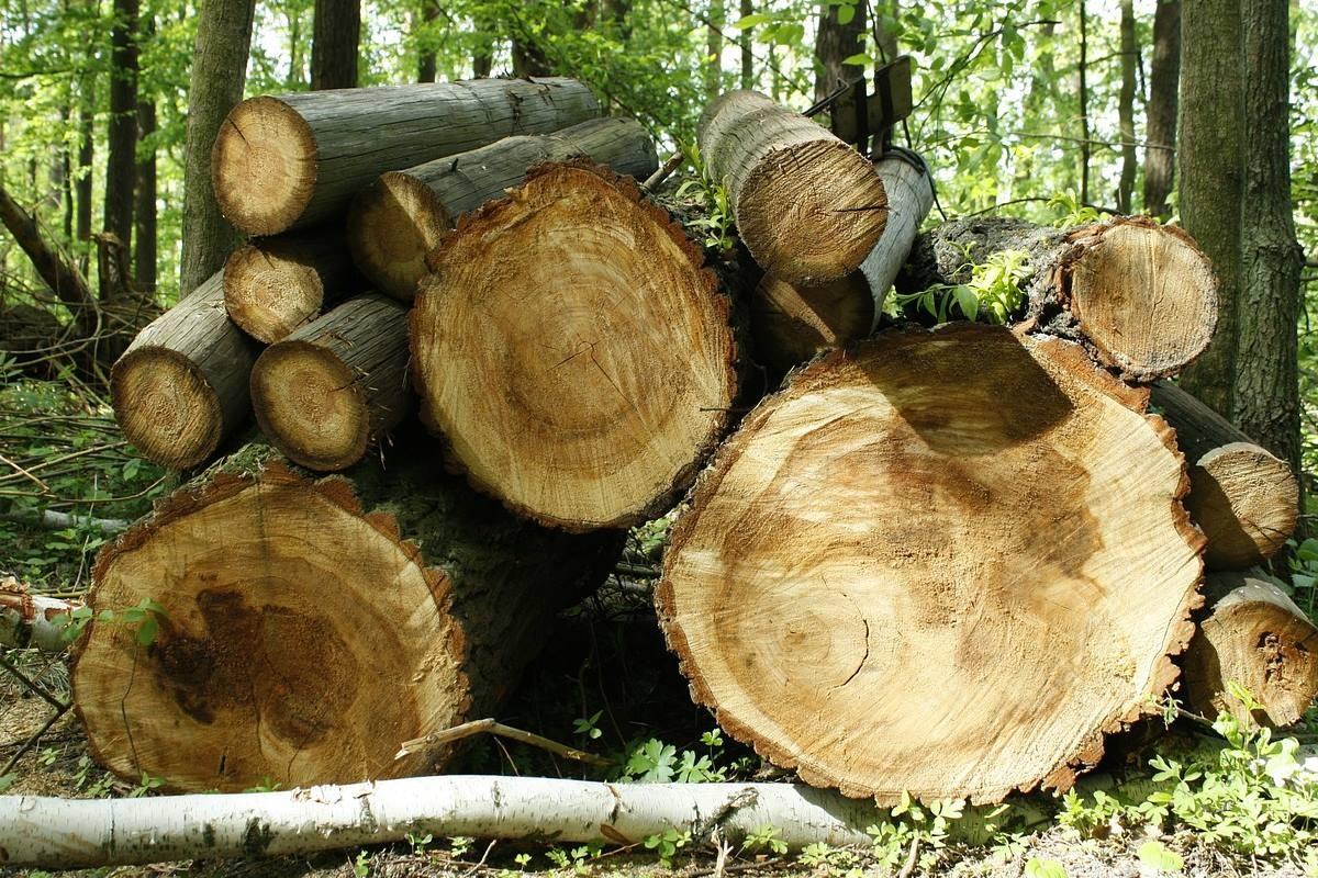 wood-54825_1280