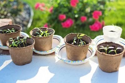 seedlings-2708679_1280