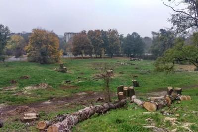 unii_lubelskiej_wycinka_drzewa_skwer_DG