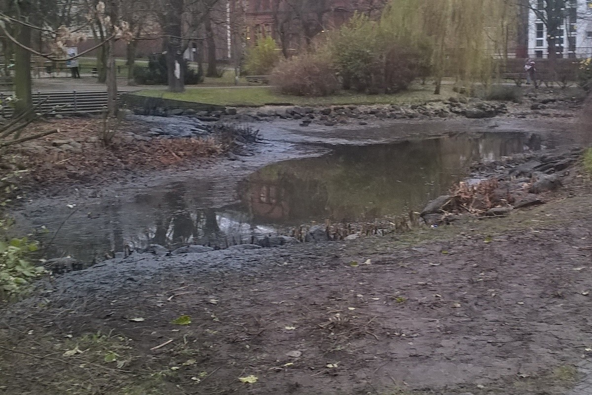 Staw_Park Kazimierza Wielkiego_Bydgoszcz_Bagrowanie
