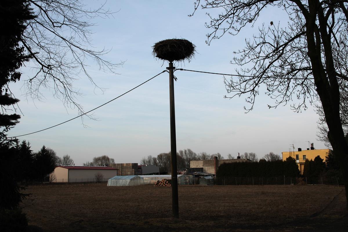 Łęgnowo-bocianie gniazdo_SG (1)