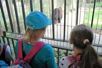 Zoo niedźwiedź_SG (2)