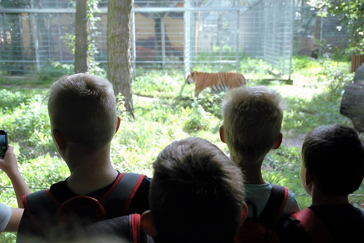Zoo tygrys_SG (3)