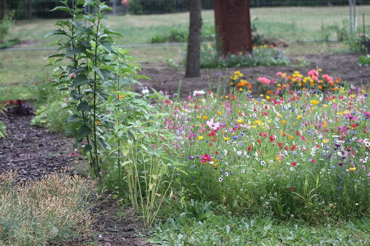 ogród miejski - sf (2)