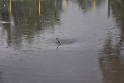 opady deszczu_podtopienie_ zdjęcie ilustracyjne - Maciej Rejment