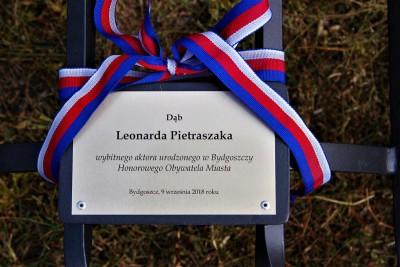 Dąb Leonarda Pietraszaka_SG (8)