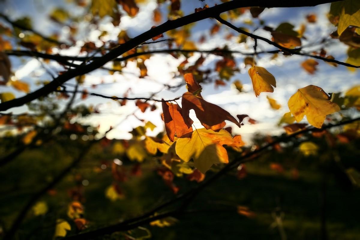 drzewa,jesień