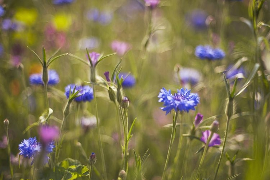 łąki kwiatowe bydgoszcz