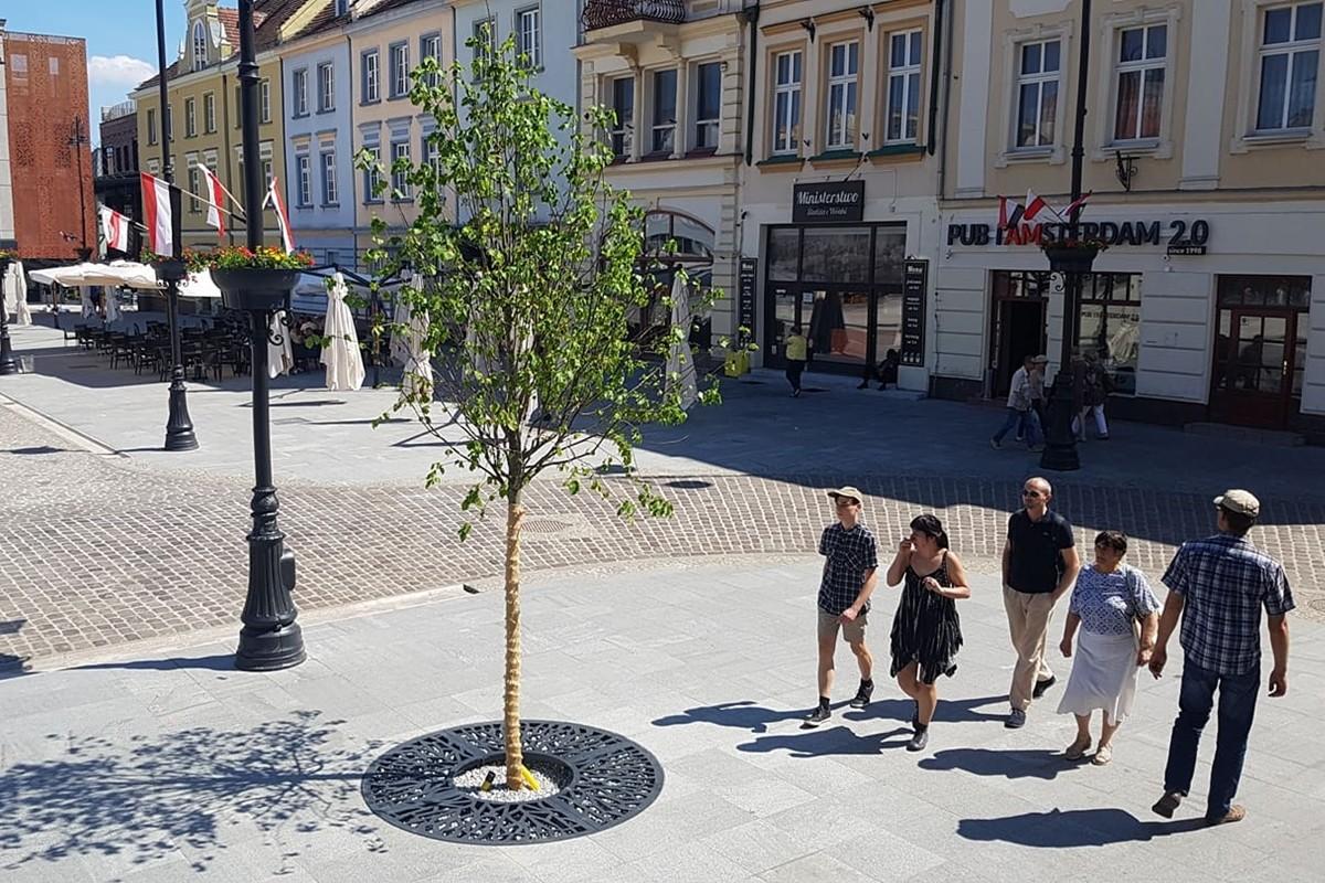 drzewa na starym rynku bydgoszcz