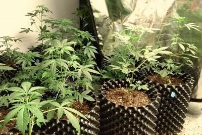 marihuana błonie kwp bydgoszcz