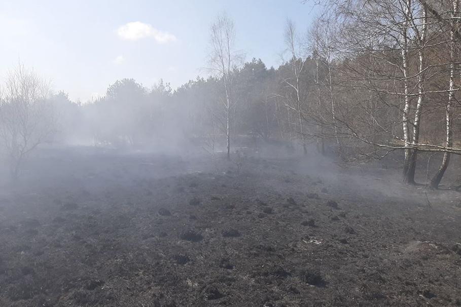16-04-2020_ pożar nieużytków_ Kolonia Obrowska_ fot. Marcin Czajka - Nadleśnictwo Dobrzejewice-1