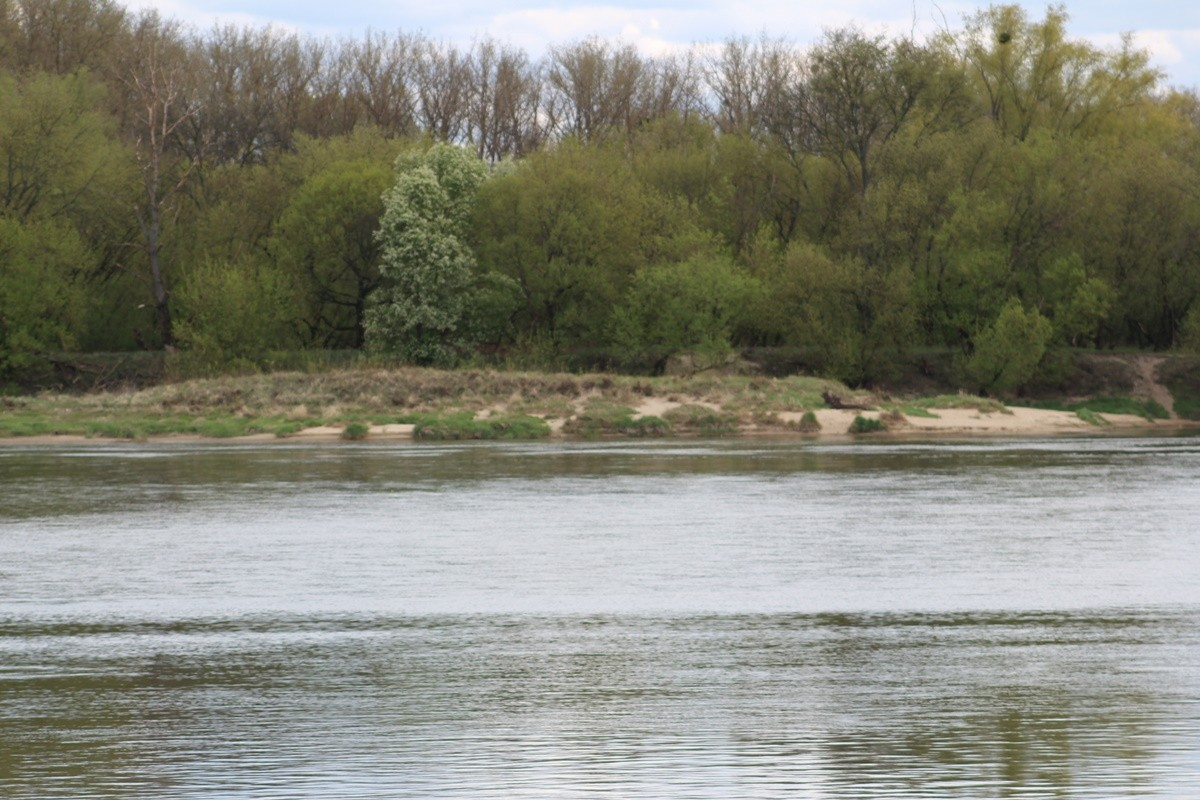 26-04-2020_ Stan, poziom - rzeka Wisła - Fordon, Bydgoszcz - JS (23)