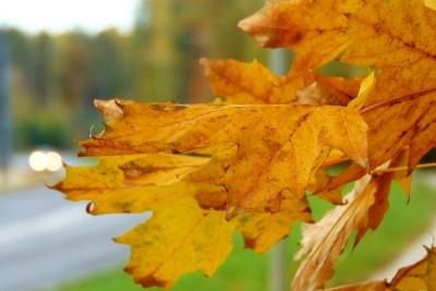 jesień bydgoszcz