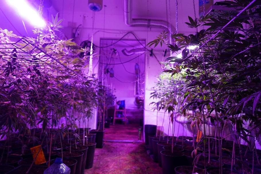9-05-2019_ plantacja narkotyków Lubicz - KWP Bydgoszcz-9