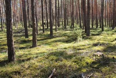 las, puszcza bydgoska - mat organizatora akcji czysta puszcza bydgoska