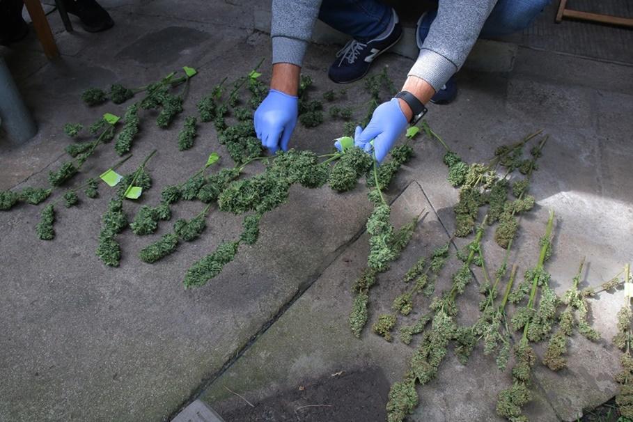 zabezpieczone narkotyki_KPP Inowrocław (1)