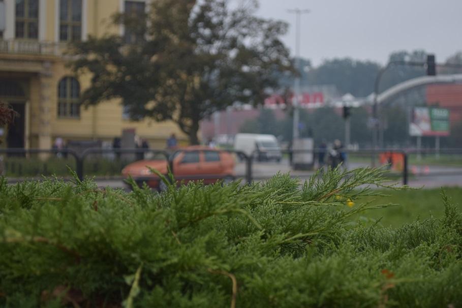 roslina, zielen, zespol szkol mechanicznych nr 1 - kk