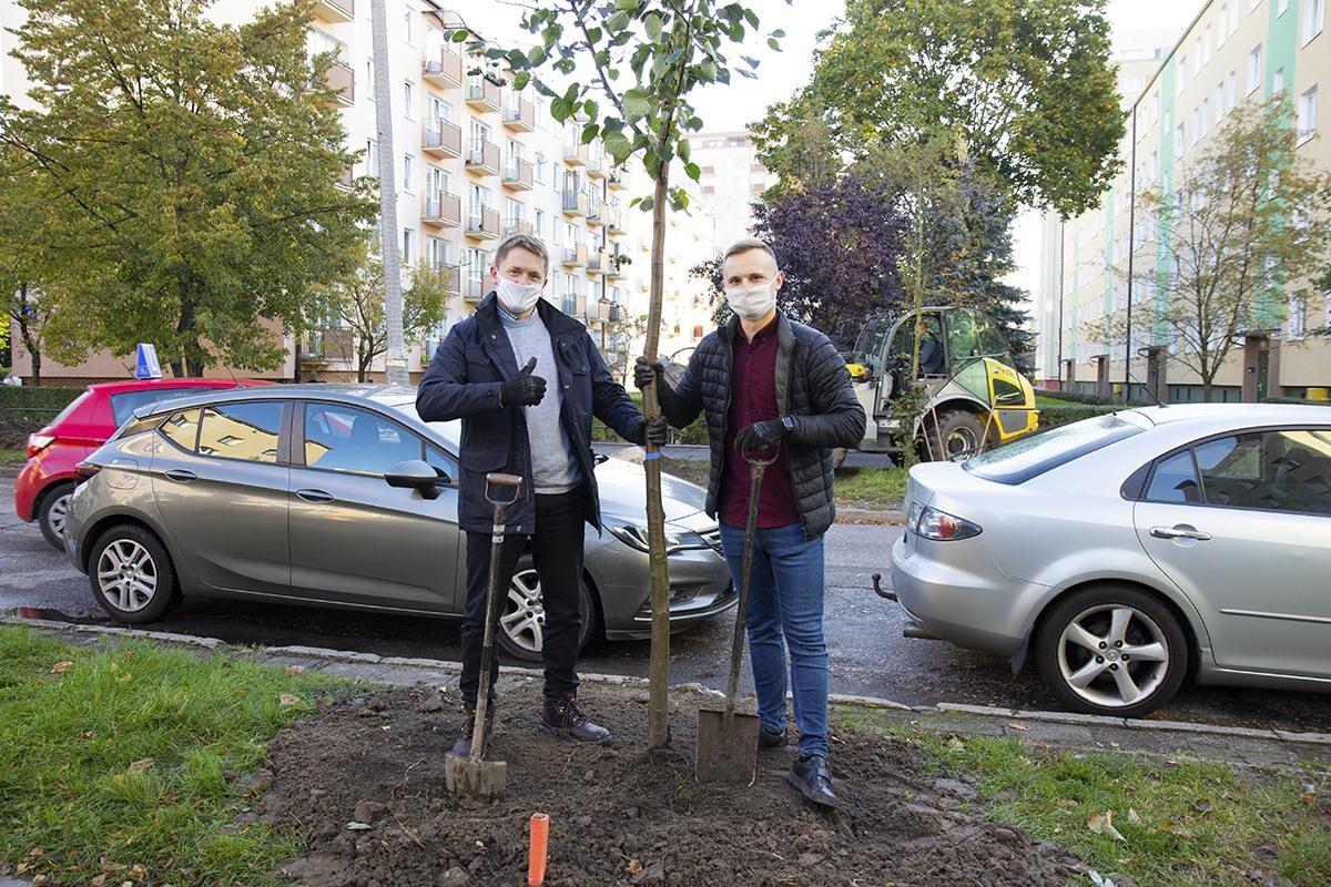 sadzenie drzew fundacja immo (5)