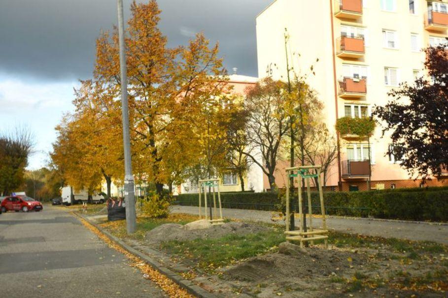 nowe drzewa Bydgoszcz