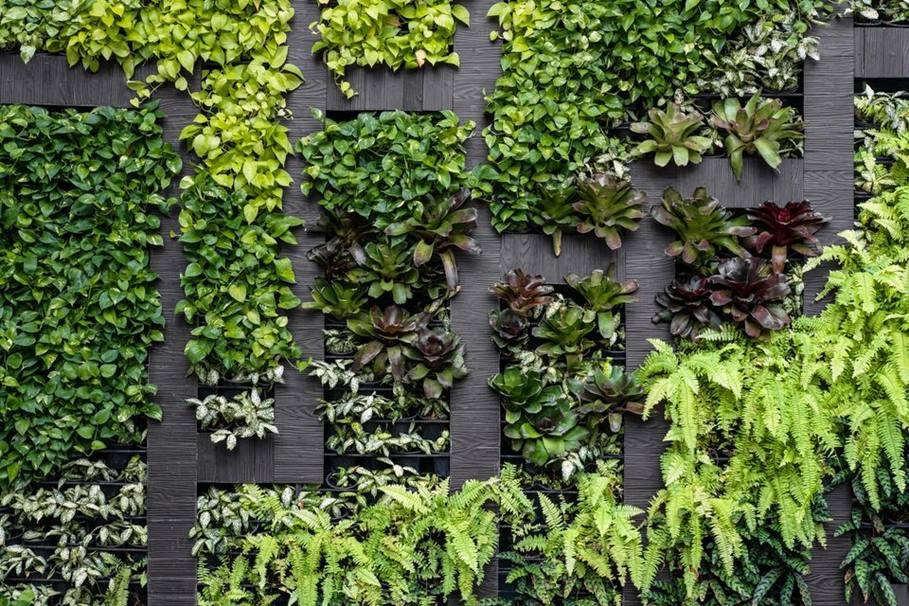 zielone ściany bydgoszcz